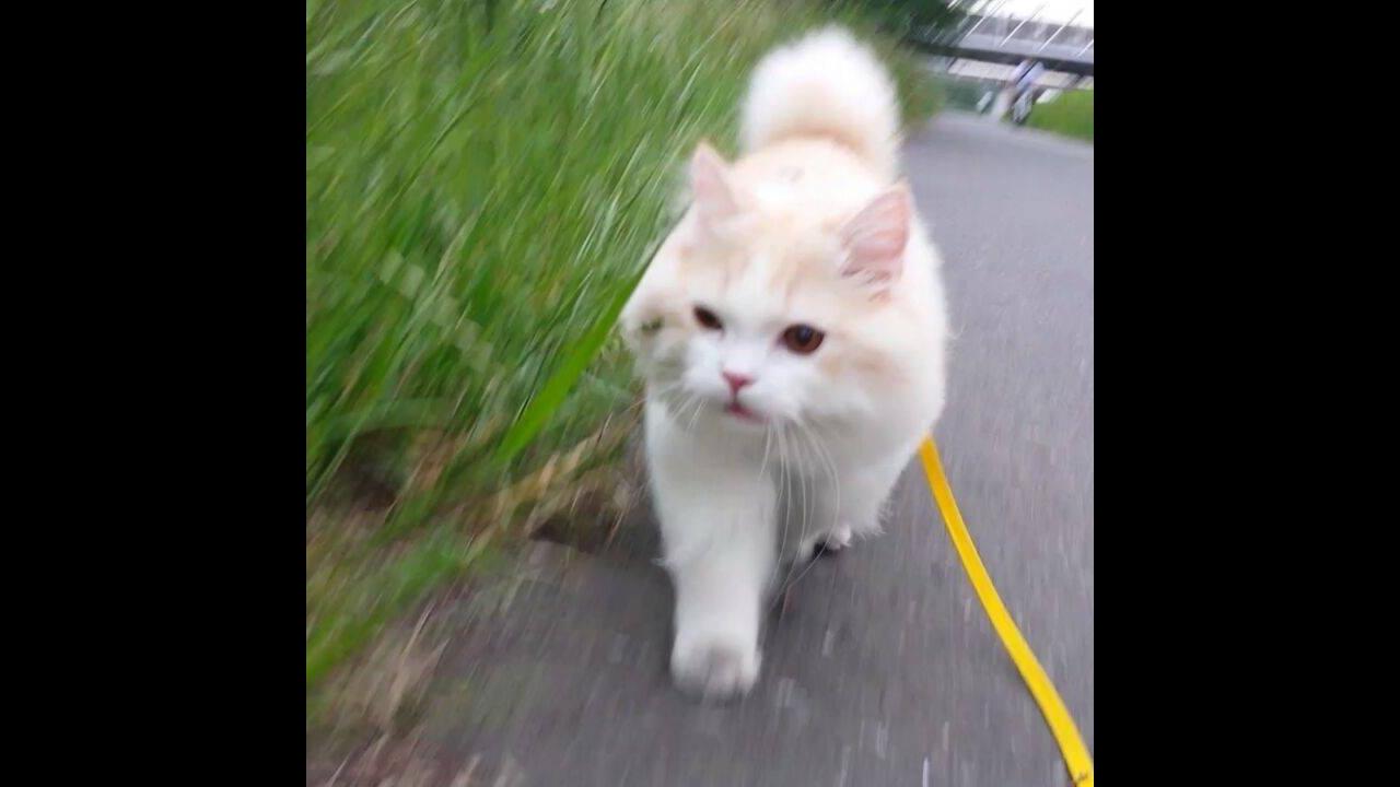 Gatinho dando um passeio, olha só que fofura de animalzinho