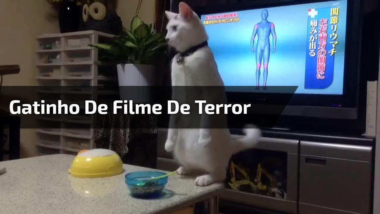 Gatinho de filme de terror