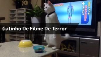 Gatinho De Filme De Terror, Esse Merece O Oscar, Olha Só Que Medo!