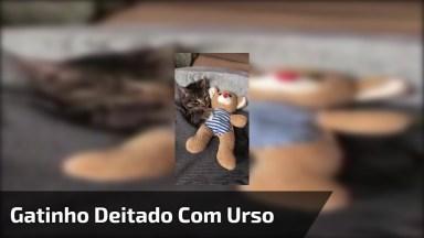 Gatinho Deitado De Baixo Das Cobertas Com Seu Ursinho De Pelúcia, Que Fofo!