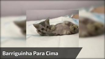 Gatinho Deitado De Barriguinha Para Cima, Olha Só A Pose Desta Fofura!