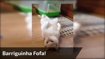 Gatinho Deitado De Barriguinha Para Cima, Olha Só Esta Carinha Linda!