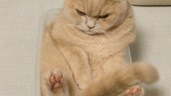 Gatinho Deitado Dentro De Um Pequeno Pote Quadrado, Hahaha!
