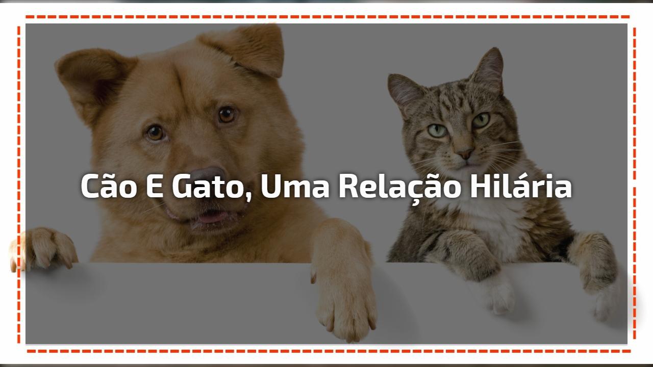 Cão e gato, uma relação hilária