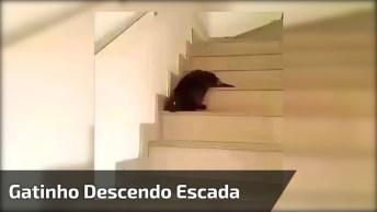 Gatinho Descendo Escada De Forma Mais Preguiçosa Que Se Posa Imaginar!