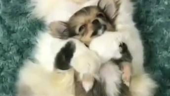 Gatinho Dormindo Abrasadinho Som Cachorrinho, Olha Só Que Fofura Estes Dois!