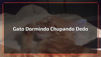 Gatinho Dormindo Chupando Dedinho, O Vídeo Mais Fofo Que Você Já Viu!