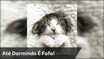 Gatinho Dormindo Com As Patinhas Encostadas Do Queixo, Olha Só Que Fofura!