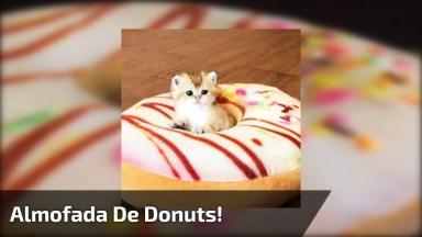 Gatinho Dormindo Com Cabeça No Meio Da Almofada Em Formato De Donuts!