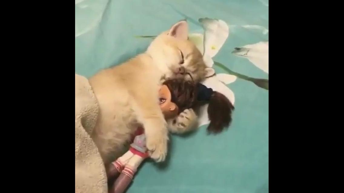 Gatinho dormindo com sua bonequinha preferida