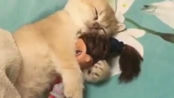 Gatinho Dormindo Com Sua Bonequinha Preferida, É Muita Fofura!