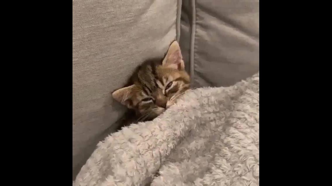 Gatinho dormindo de baixo das cobertas