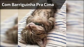 Gatinho Dormindo De Barriguinha Para Cima, Ele Parece Estar Bem Cansado!