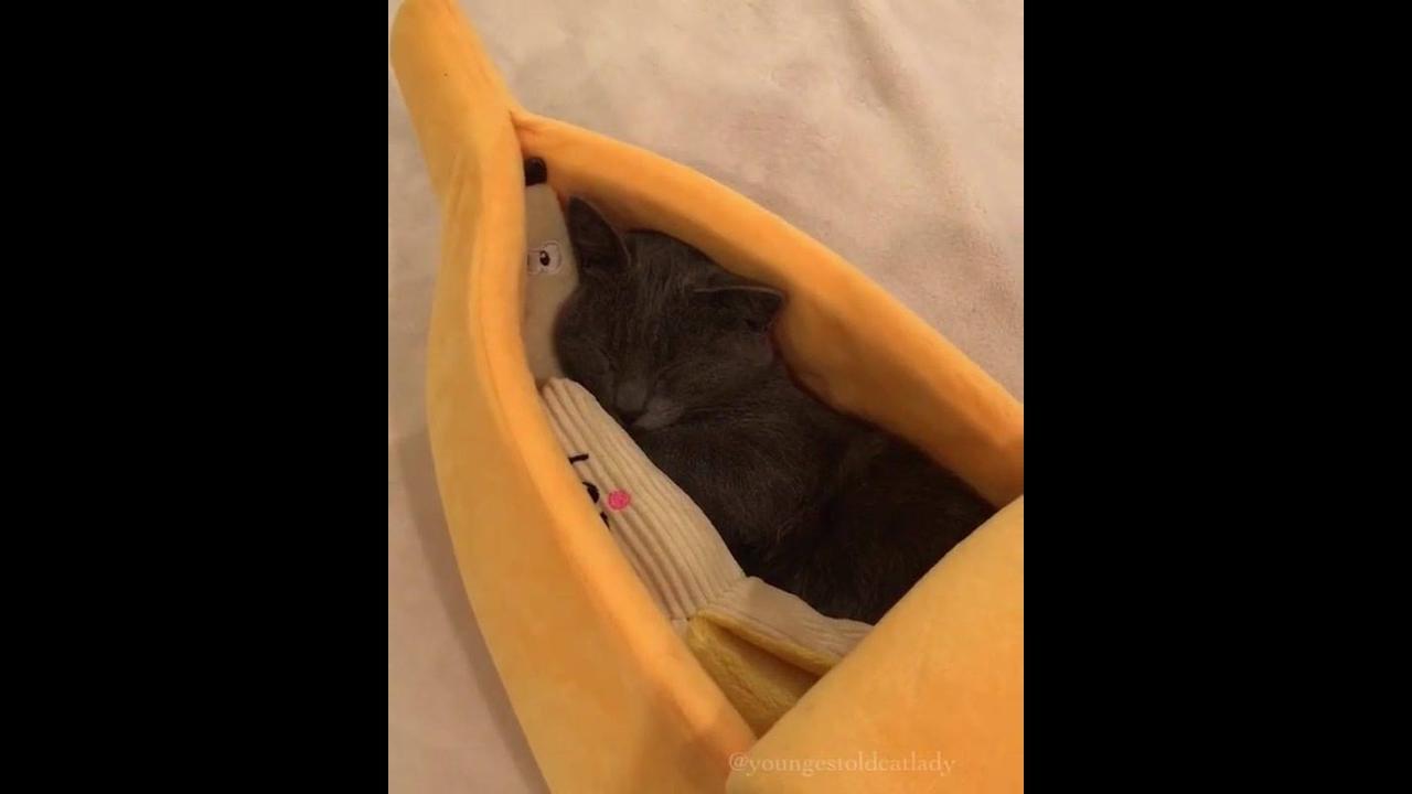 Gatinho dormindo em sua caminha em formato de banana