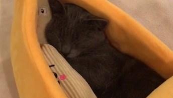 Gatinho Dormindo Em Sua Caminha Em Formato De Banana, Olha Só Que Fofo!