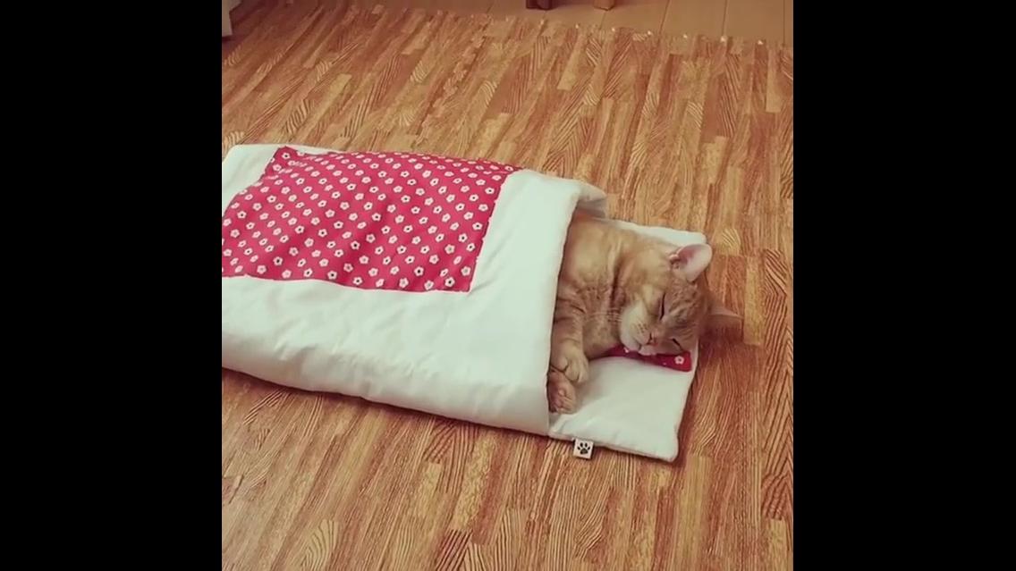 Gatinho dormindo em sua caminha veja como ele é calminho