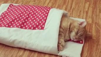 Gatinho Dormindo Em Sua Caminha Veja Como Ele É Calminho, Que Fofo!