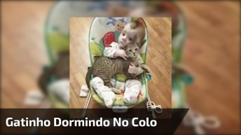 Gatinho Dormindo No Colo Do Bebê, Olha Só Que Amor Estes Dois!