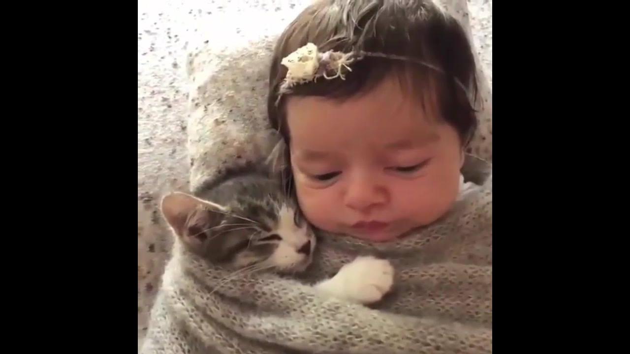 Gatinho e bebê juntinhos