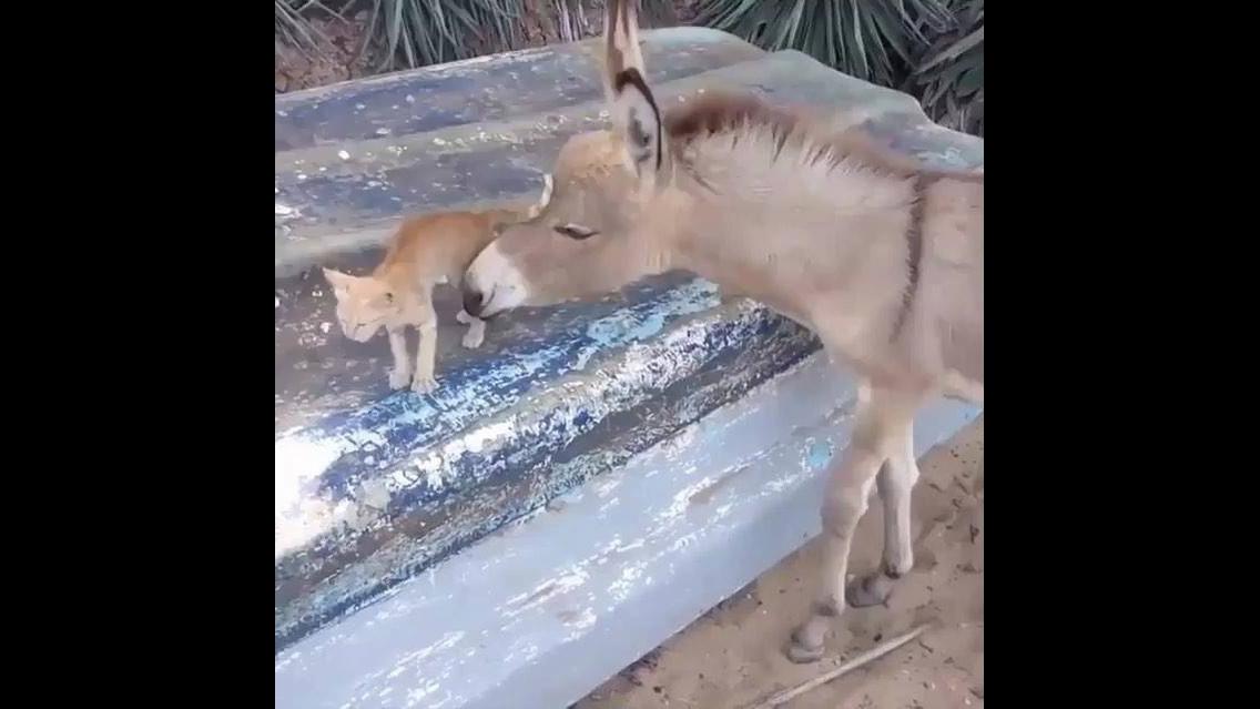 Gatinho e burrinho uma amizade muito fofa