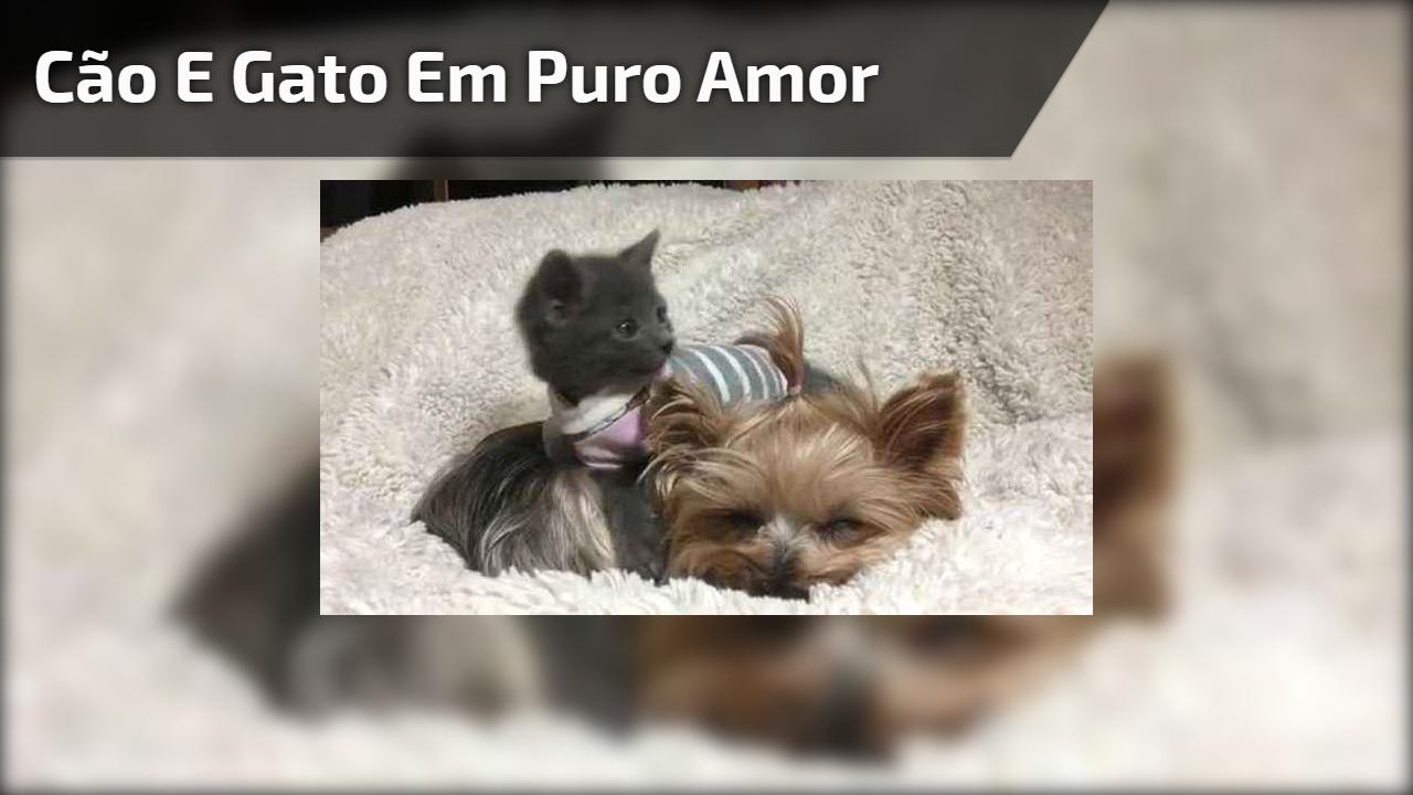 Cão e gato em puro amor