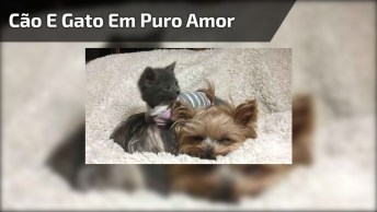 Gatinho E Cachorrinho Em Puro Amor, Que Dupla Mais Linda!