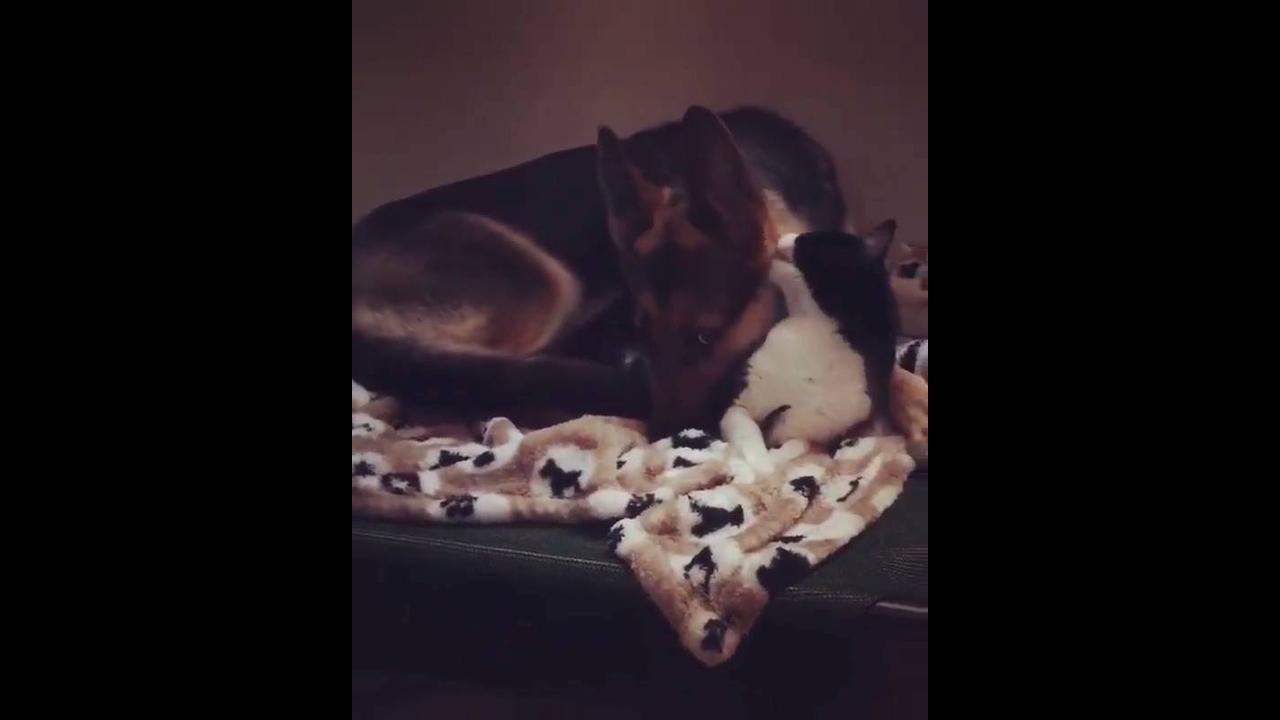 Gatinho e cachorro dormindo juntinho, olha só que amor esses dois!!!
