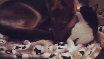 Gatinho E Cachorro Dormindo Juntinho, Olha Só Que Amor Esses Dois!