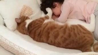 Gatinho E Garotinha Deitados Juntos, Olha Só Que Fofura Estes Dois!