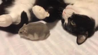 Gatinho E Hamster Melhores Amigos, Olha Que Amor Estre Os Dois!
