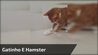 Gatinho E Hamster, O Gatinho Esta Com Medo Do Pequeno Amiguinho!