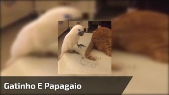 Gatinho E Papagaio Competindo Quem Perturba Mais O Outro, Hahaha!