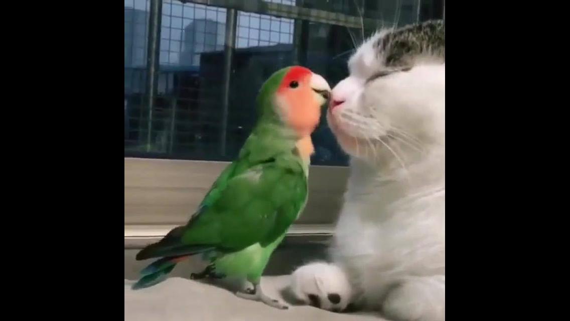 Gatinho e periquito, o vídeo mais fofinho que você verá hoje