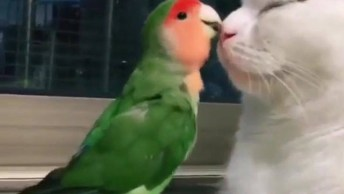 Gatinho E Periquito, O Vídeo Mais Fofinho Que Você Verá Hoje!