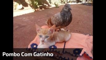 Gatinho E Pombo Brincando Juntos, Olha Só Que Amiguinho Persistente!