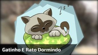 Gatinho E Rato Dormindo Juntos, Quem Disse Que Eles Precisam Ser Inimigos!