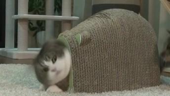 Gatinho Em Casinha Que Parece Uma Casca De Tartaruga, Olha A Carinha De Susto!