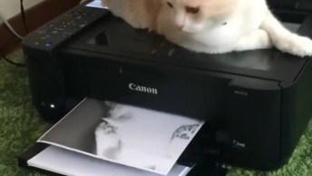 Gatinho Em Cima Da Impressora, Que Tau Um Xerox? Olha Só Como Ficou!