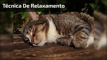 Gatinho Em Posição Engraçada Para Relaxar, Que Coisa Mais Linda!