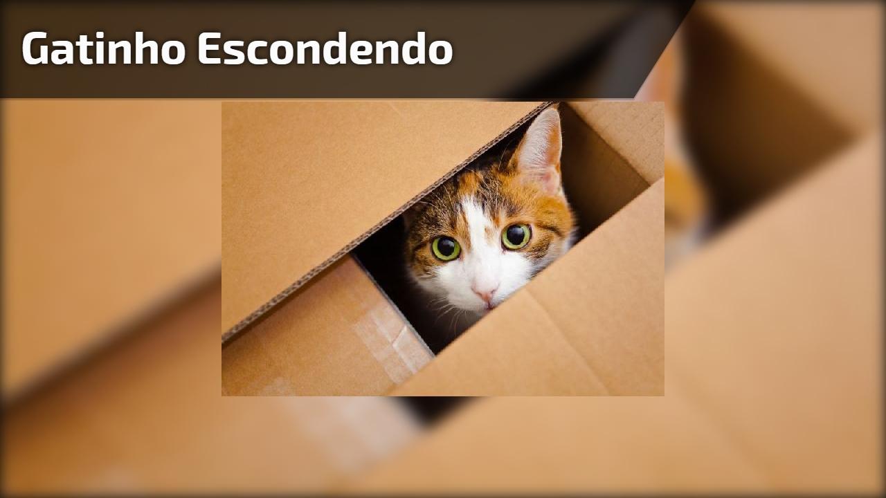 Gatinho escondendo