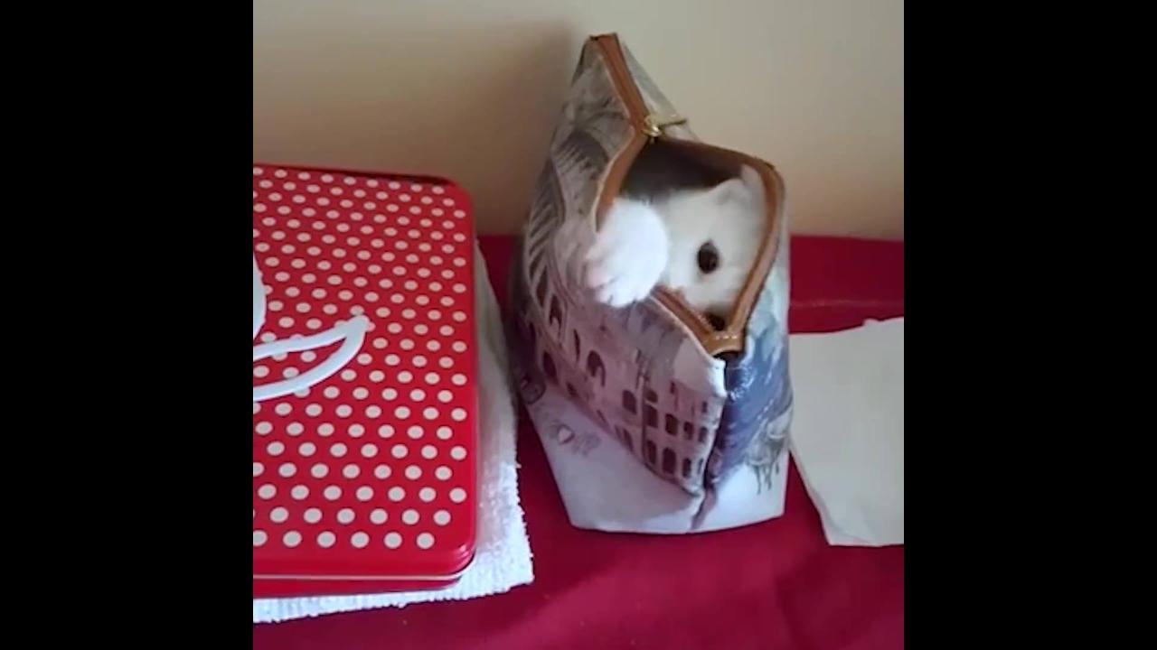 Gatinho escondendo dentro de uma bolsinha
