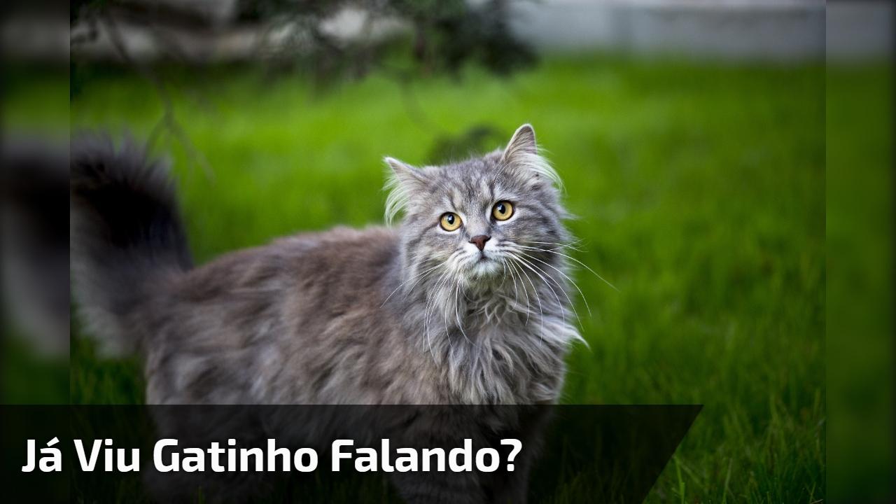 Já viu Gatinho falando?