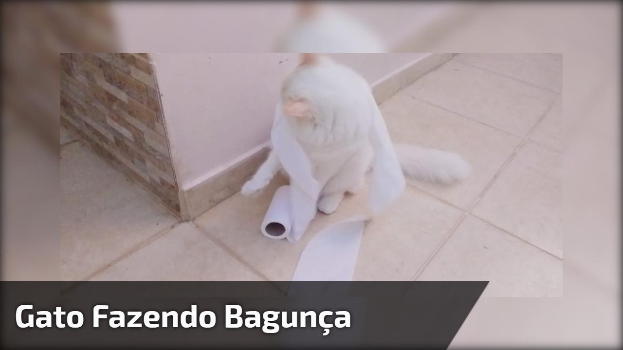 Gatinho faz uma bagunça com um rolo de papel higiênico, que arteiro!