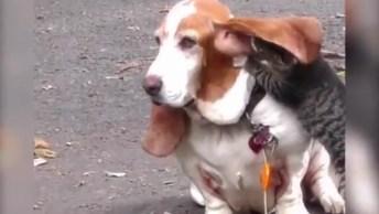 Gatinho Fazendo Carinho Em Cachorro, É Muita Fofura Em Poucos Segundos!