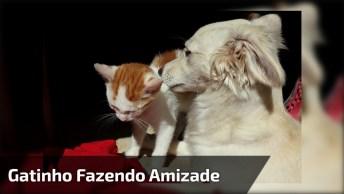 Gatinho Fazendo De Tudo Para Conquistar A Amizade De Seu Amigo Cãozinho!
