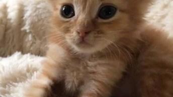 Gatinho Fazendo Massagem Em Outro Gato, Uma Fofura De Bichano!