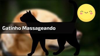 Gatinho Fazendo Massagem Em Seu Amigo, Olha Só Que Cena Fofinha!