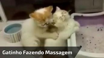 Gatinho Fazendo Massagem Na Gatinha, Que Cena Mais Fofinha, Confira!