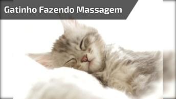 Gatinho Fazendo Massagem Nas Costas Da Gatinha, Que Cena Mais Fofa!
