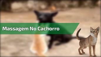 Gatinho Fazendo Massagem No Cachorro, Olha Só A Carinha Dele!